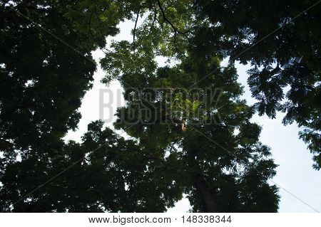 Tree branches , leaves, nature , space , green , shiny , light