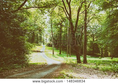 English Woodland Path With The Sun Breaking Through The Leaves