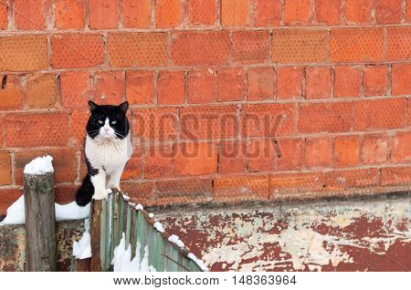 gloomy homeless cat on the fence on a background of a brick wall