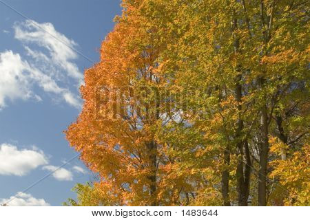 Autumn Trees Against Blue Sky