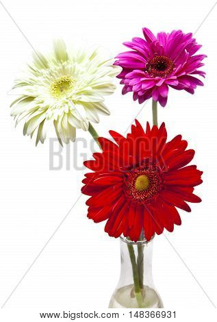 Three bright flowers. Gerbera in a sunny day