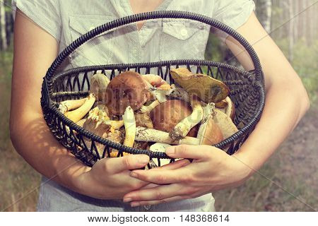 mushroom hunter holds a woven basket with mushrooms on the background of blurred trees / forest harvest gifts