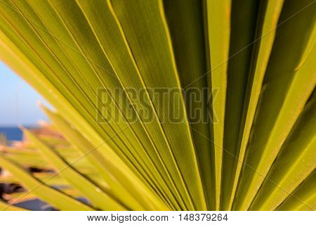 Leaf Background Texture Pattern