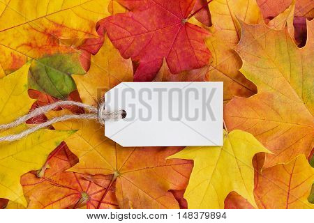 Price tag from recycled paper on twine string on autumn leaves background. Shop or discount sale concept.