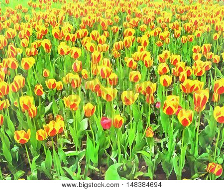 Watercolor pattern flowerbed bright red with yellow tulips. Vibrant illustration graphic background. Stylized fabulous decorative backdrop.