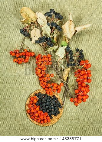 Rowan rowanberry Chokeberry aronia . Dried herbs for use in alternative medicine spa herbal cosmetics herbal medicine preparing infusions decoctions tinctures powders ointments butter tea bath.