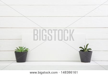 Two cactus on white wooden shabby chic background for a mock up in natural style.