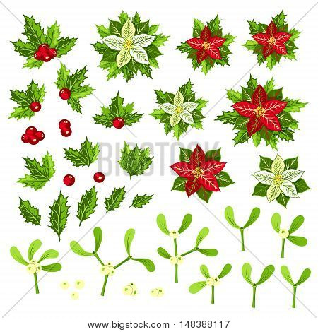 Christmas plants: poinsettia holly and mistletoe. Collection of decorative elements for your design.