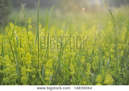 fresh flower and plant  green nature landscape