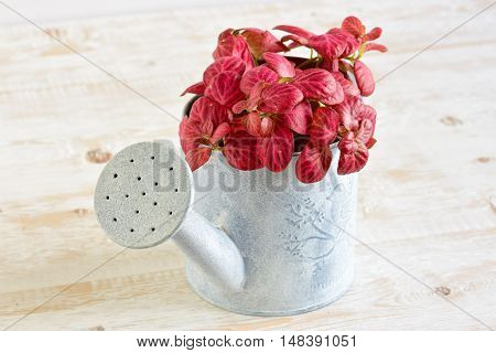 Room Flowers In A Pot