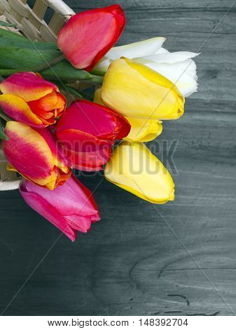 colorful tulip bouquet on dark wooden background