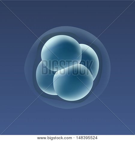 In vitro fertilization IVF . Embrio development. 4-stage cell. Illustration for web or typography magazine, brochure, flyer, poster.