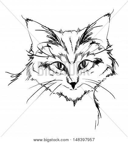 Sketch. Face cat on a white background