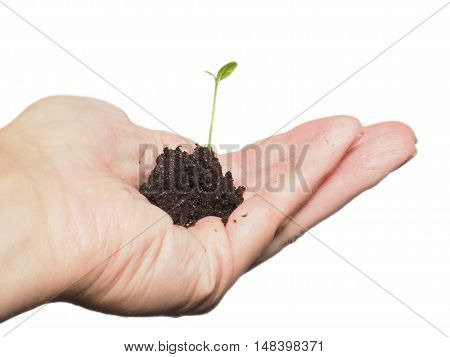 Small plant or tree growing in a tiny pile of fresh soil person's hand, isolated on white