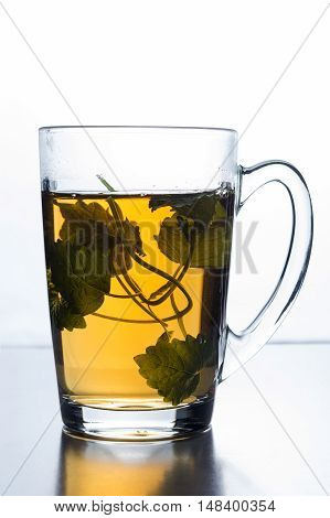 Glass isolated on white lightning background. A cup of green tea and a sprig of mint