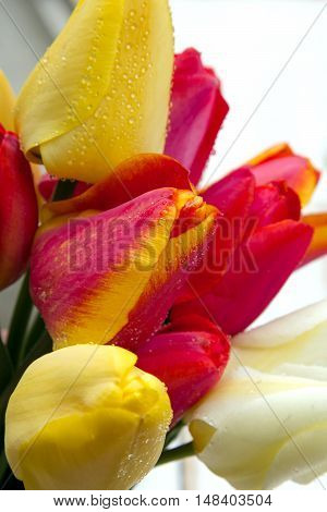 colorful tulip bouquet on white wooden background