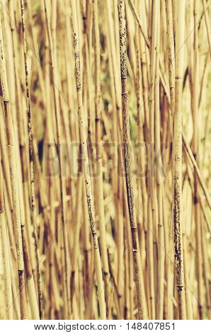 Abstract background from dry brown reed plants, organic natural texture