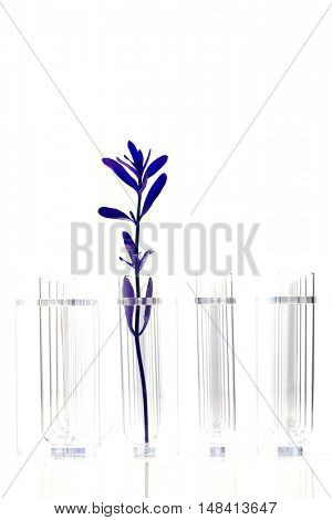 Purple Plant in test tube with three empty test tubes