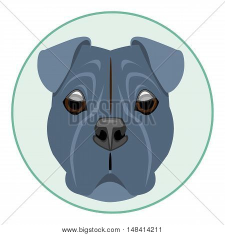 Digital vector boxer dog face, in green circle, flat style