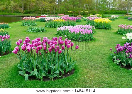 Colourful Tulips Flowerbeds in Attractive Formal Garden