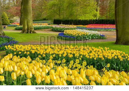 Colourful Tulips Flowerbeds and Pathway in an Spring Formal Garden