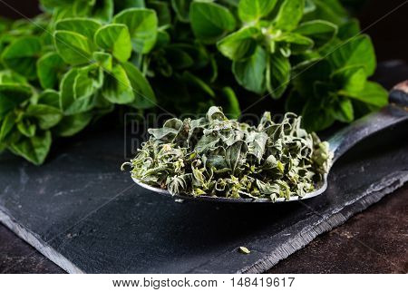 Fresh and dried oregano spices. Spoon of dried oregano and bunch of fresh oregano on black stone table