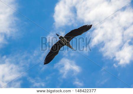 crane flying against the blue sky Georgia.