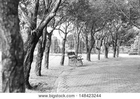 Park in Black and White photo, Monotone photo. Black and White Composition.