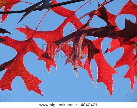 Herfst Eikenloof