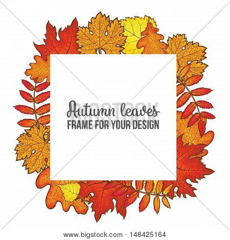 square frame with fall leaves, sketch style illustration isolated on white background. Red, yellow and orange maple, aspen, oak and rowan autumn leaves as a square frame