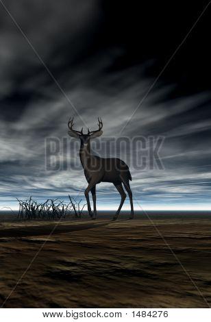 Deer (Buck)