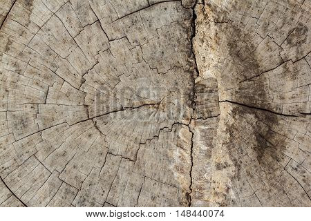The Wood texture beautiful background Naturally occurring
