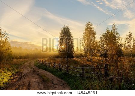 Rural road in the woods at dawn