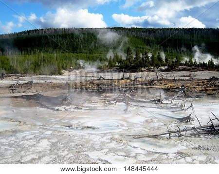Porcelain basin landscape, with bare soil, dead trees, hot springs and clouds (Yellowstone, Wyoming, USA)