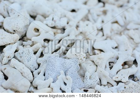 White Coral Beach Background Texture