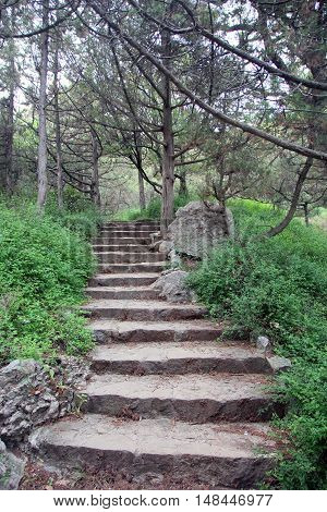 beautiful old stone stairs natural limestone with stone steps in summer coniferous park outside in Crimea
