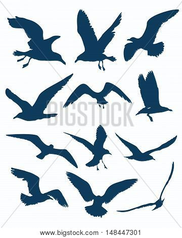 Vector seagull silhouettes on the white background