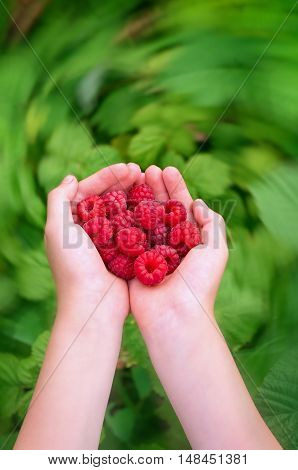 ripe raspberries in children's palms in the motion blur filter