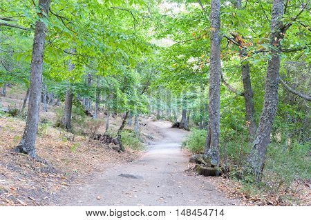 forest of chestnut and pine trees in the foreground with bright green