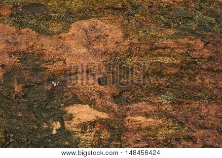Surface of sandstone with lichen wall background.