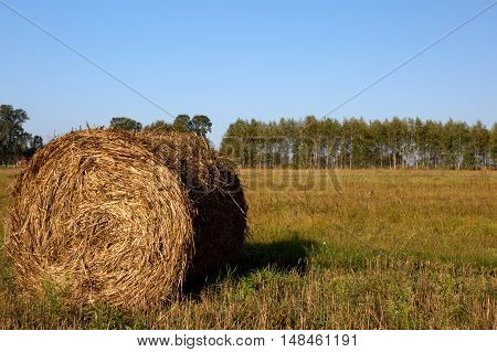 Photo of hay bale in the foreground in rural field and field background and row of trees on a sunny autumn day. Poland August. Horizontal view.