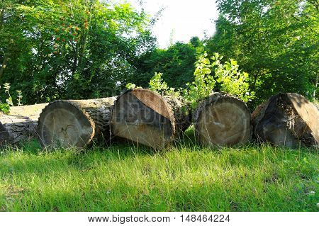 felled boles in a forest at the sunny summer day