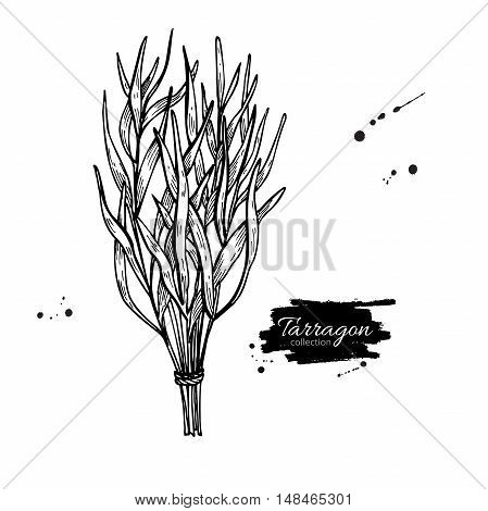 Tarragon vector hand drawn illustration. Isolated spice object. Engraved style seasoning. Detailed organic product sketch. Cooking flavor ingredient. Great for label, sign, icon