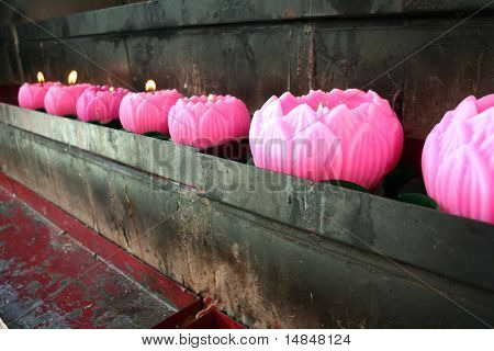 Pink wax lotus candles burnt as offerings in a chinese temple