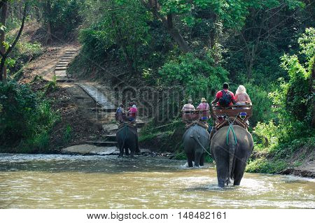 Elephant Trekking Through Jungle