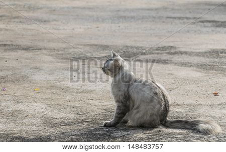 Portrait White Cat Look Back On Concrete Floor. Pets Are Hunting.