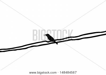 Silhouette Mugimaki Flycatcher Yellow Bird On Wire With Isolated, White Background.