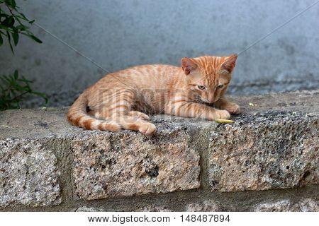 Cute ginger kitten in the Chalkidiki. Greece.