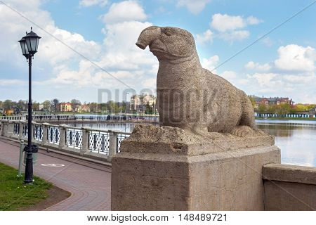 RUSSIA KALININGRAD - APRIL 29 2016: Ancient sculpture of a Elephant seal on the Upper Pond in Kaliningrad. The sculpture is part of a complex of marine animals and sculptures was installed in 1913. Until 1945 the city belonged to Germany and was called Ko