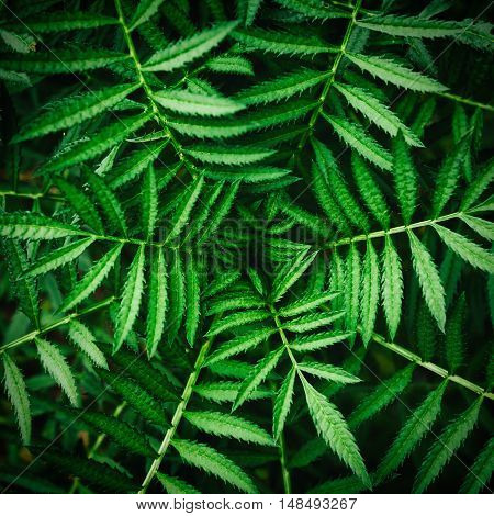 Bright Green Tropical Plant Leaf Detail /  close up green leaf texture for background